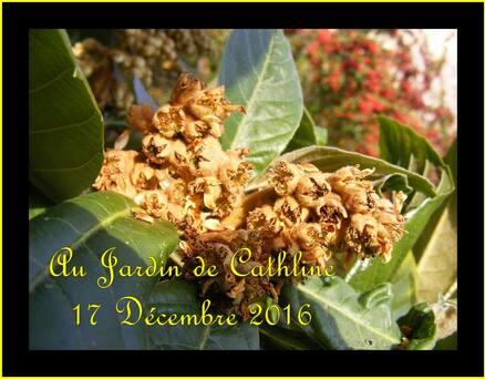 Jardiner avec la Lune du 21 au 31 Décembre