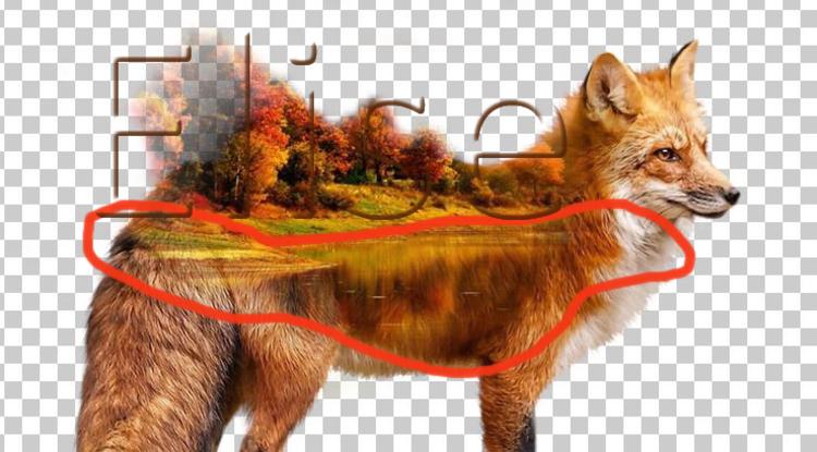 Un renard pas comme les autres