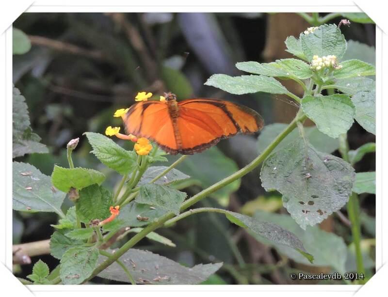 Au Paradis du Papillon à Sanguinet - 3/10