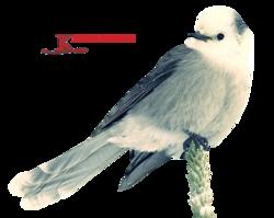 Birds Tube