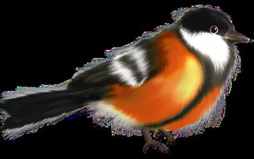 Oiseaux de Noël  / 3