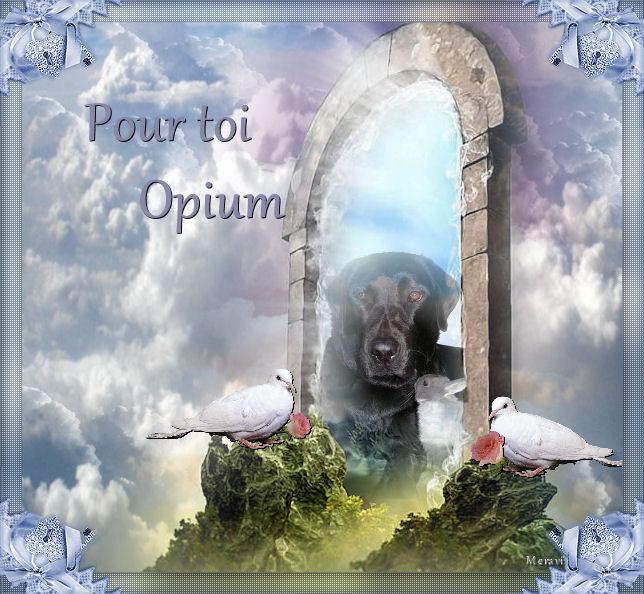 Mon hommage a Opium