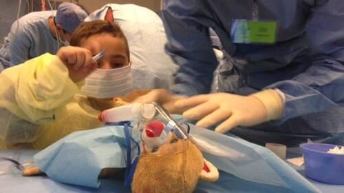 """Wolu1200 : Des ours en peluche sur le billard à la """"Clinique des Nounours"""""""