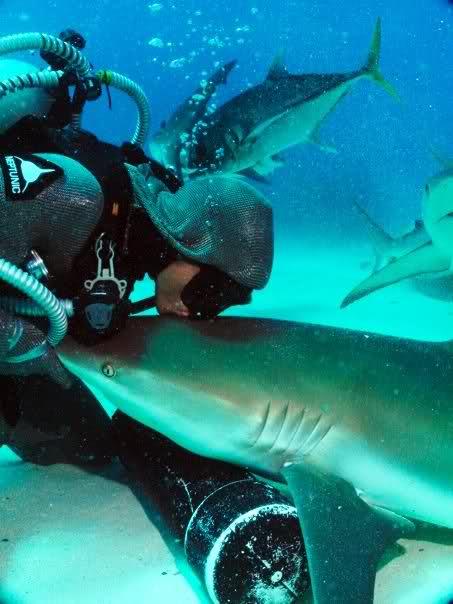* Dance avec les requins