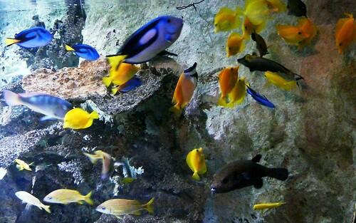Poissons de récifs corraliens