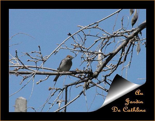 oiseau à identifier 2