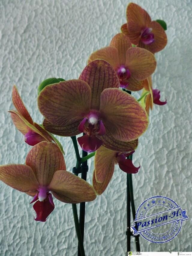 des orchidées...