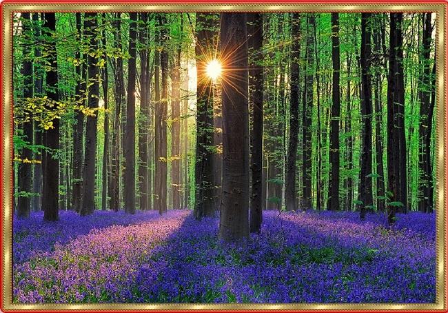 Miracle de la Nature