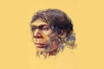 Portrait d'un homme de Neandertal
