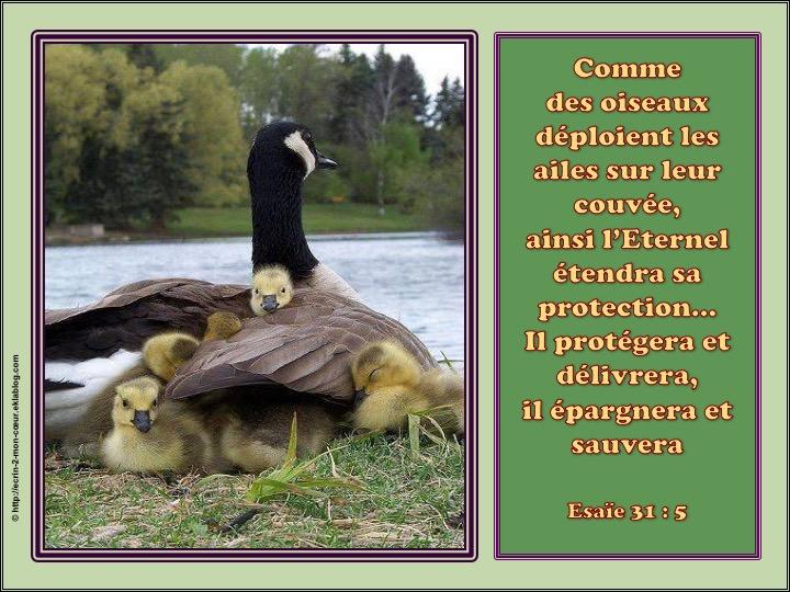 Sous la protection de Dieu - Esaïe 31 : 5