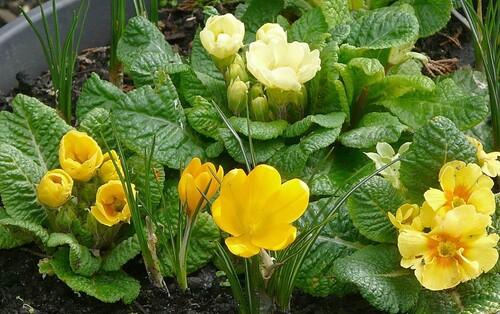 Le printemps en approche et en couleur...