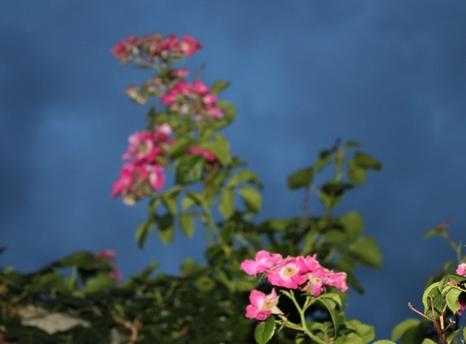 Jardin en fleurs !