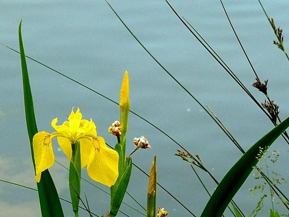 fleurs1.06-065.JPG