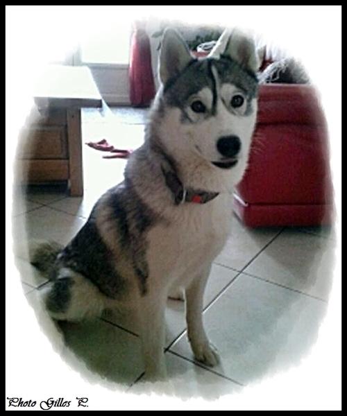 Iska (14,5 mois)