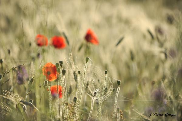 """""""Florilège de pétales et de fruits"""", toujours de magnifiques photos de Jean-Pierre gurga..."""