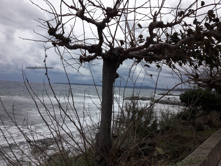 Cousinade au bord de la mer...