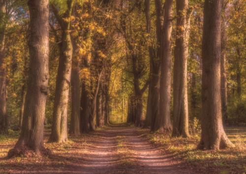 Douceur forestière