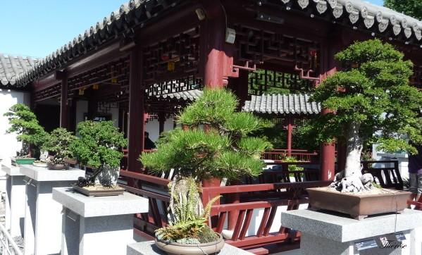 Jardin botanique chinois(59)