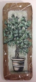 petit olivier en pot sur bois flotté