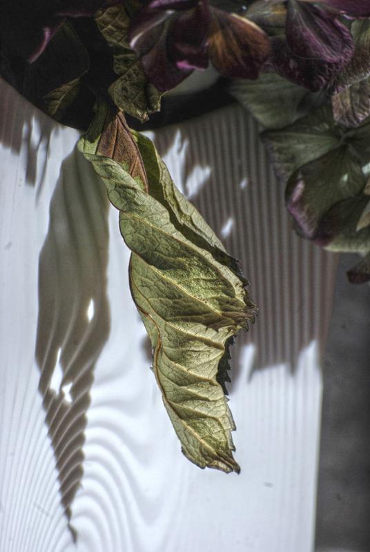 feuille d'hortensia séchée devant un vase