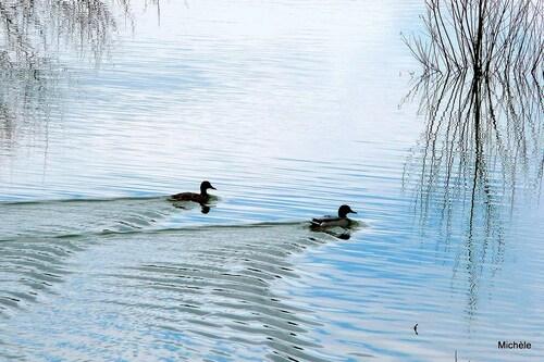 Paysages au bord de l'eau ...