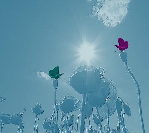 Fond de blog coquelicots et papillons