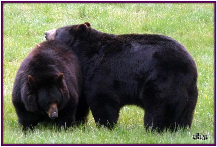 Animaux sauvages - La piste Safari  (2)