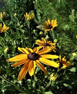 Des airs de fin d'été au jardin!
