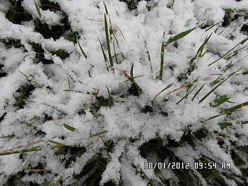neige-30-01-2012-040-copie-1.JPG
