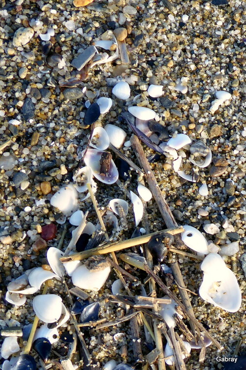 Barcarès: la plage en novembre
