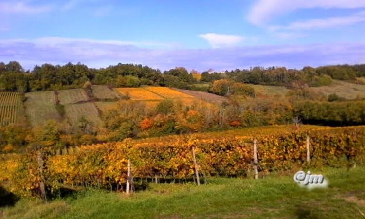 vignobles couleur or ,Loupiac,Gabarnac,Monprimblanc(Gironde)