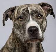 Wolu1200 : Une habitante de notre commune conteste l'euthanasie d'un chien par la SPA
