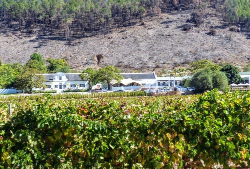 la route des vins; domaine viticole de Franschhoek ;