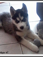 Maô (2 mois)