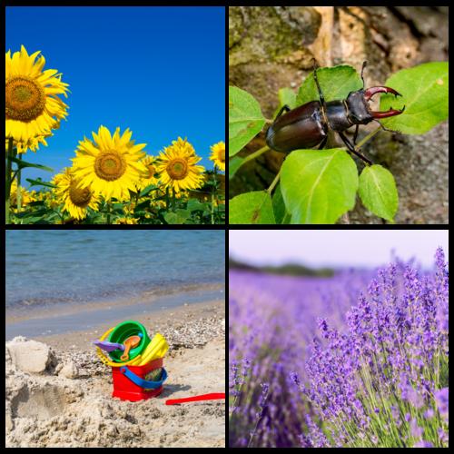 Photos pour la table des saisons/nature de l'été