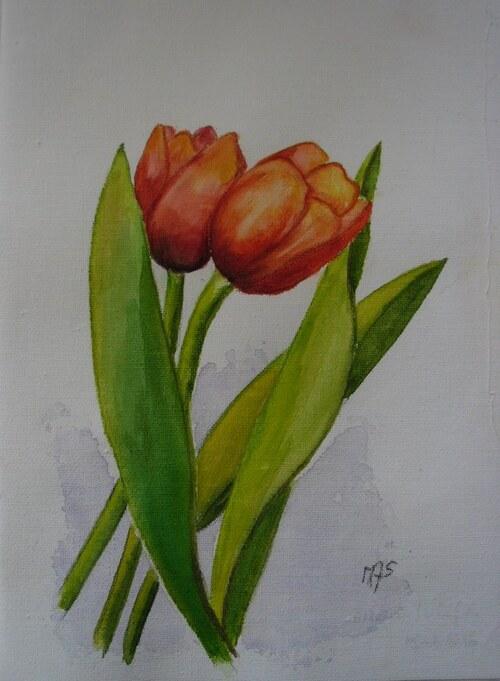 Deux tulipes