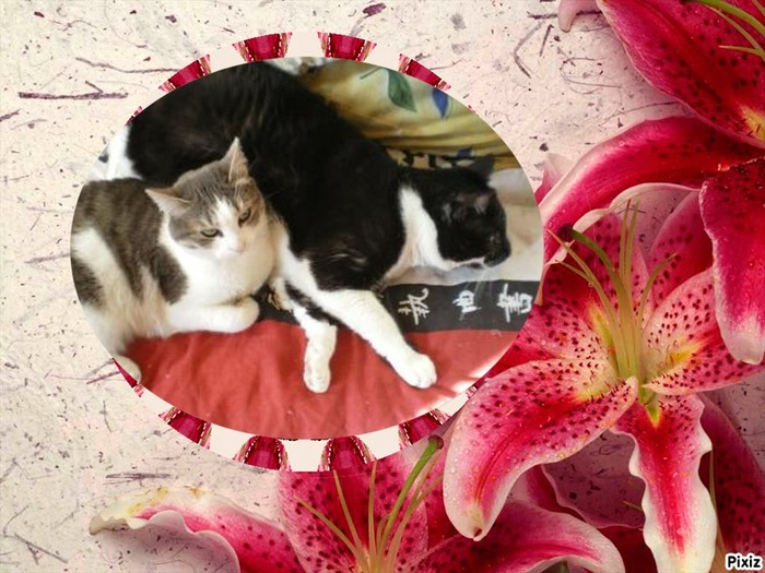 Mes Chatmours (11)