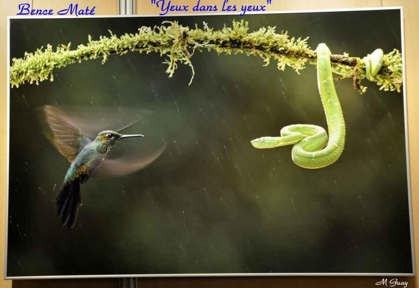 colibris-et-serpent-2197-copie-1.jpg