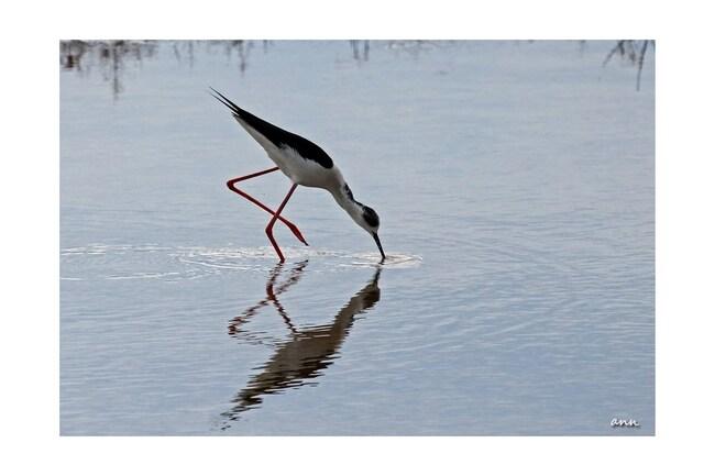 En longeant l'étang de Leucate (Aude)