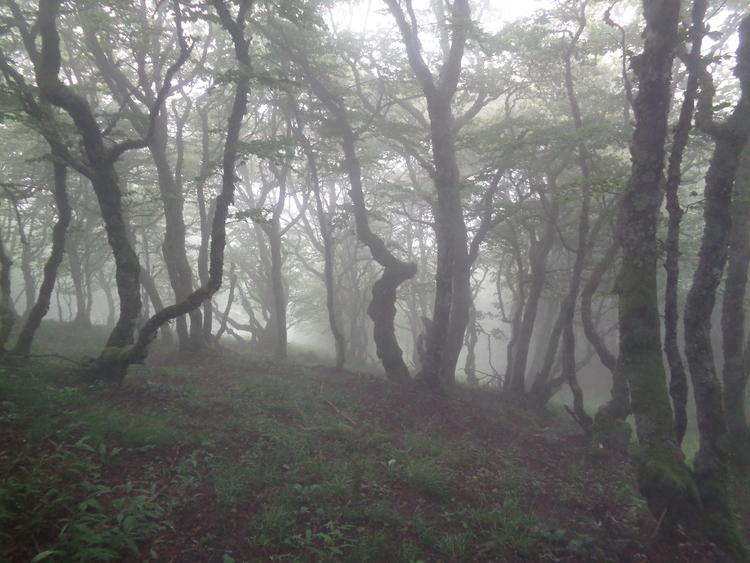 Vosges- marche dans la brume