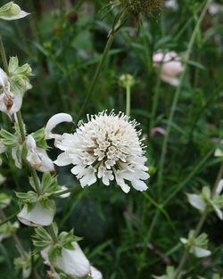 Le top 5 des floraisons blanches