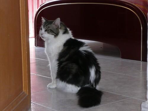 Ramsès le chat de Feu Vert et réponses aux devinettes