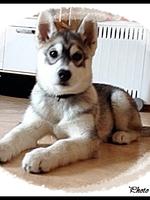 Jaïka (3 mois)