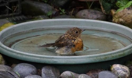 Le bain de Polisson