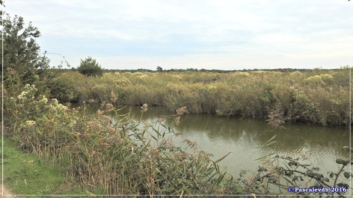 Plaines du Teich et domaine de Fleury - Octobre 2016 - 6/13
