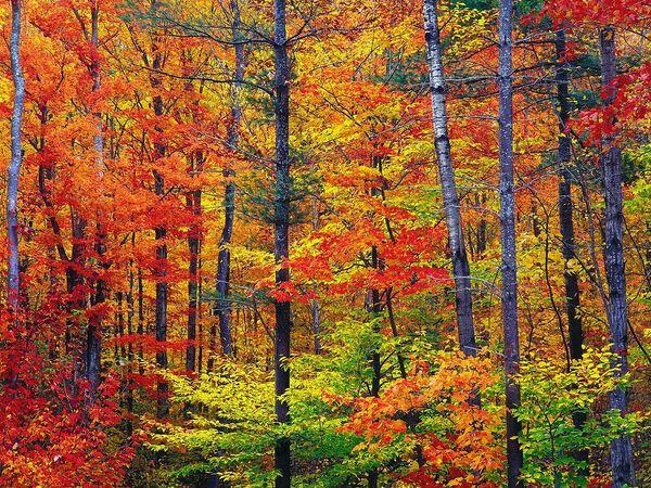Les poètes et l'automne