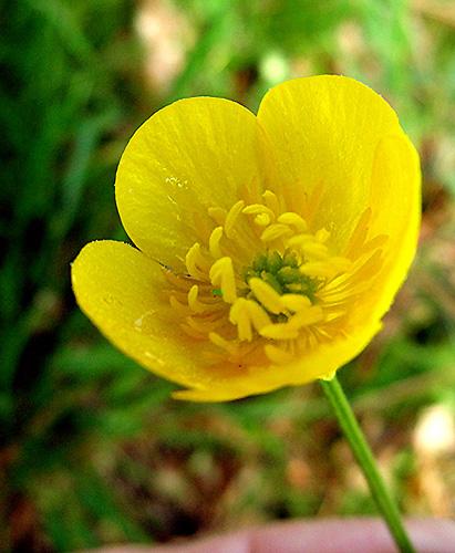 jaunes51