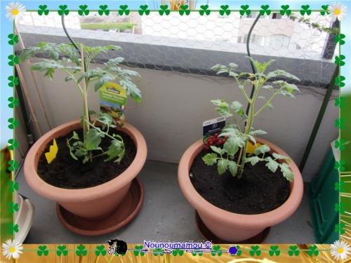 Le jardin est installé sur le balcon