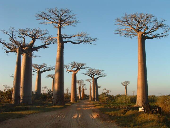 Madagascar et ses trésors