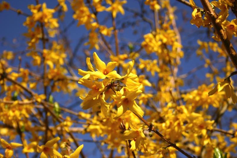 le printemps est là.....